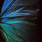Morpho 1 by Nikki Trexel