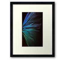 Morpho 1 Framed Print