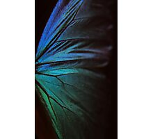 Morpho 1 Photographic Print