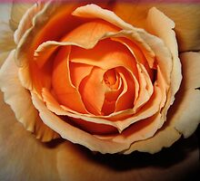a rose for you ! by MardiGCalero