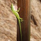 Small Green Lizard by Kathleen Brant