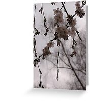 Central Park Cherrry Blossoms Greeting Card