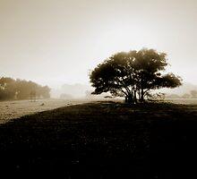 Misty morning, Goolwa SA by Mandi Whitten