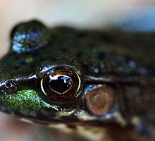 Peeping Toad by Paul Baker