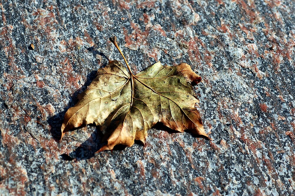 Fall Leaf by Paul Baker