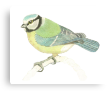 """Blue tit"" Canvas Print"