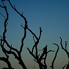 Branches by gahuja