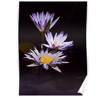 Waterlily trio Poster