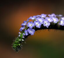 Splendor in the Grass and Glory in the Flower by Bonnie T.  Barry