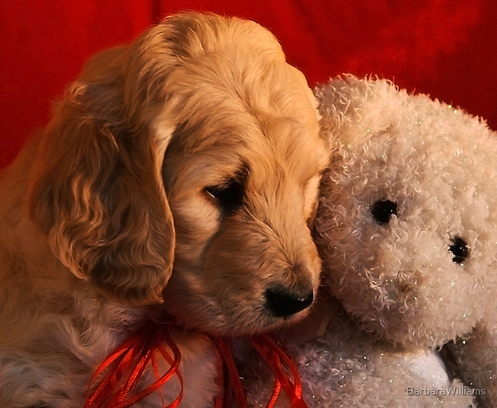 Puppy Love by BarbaraWilliams
