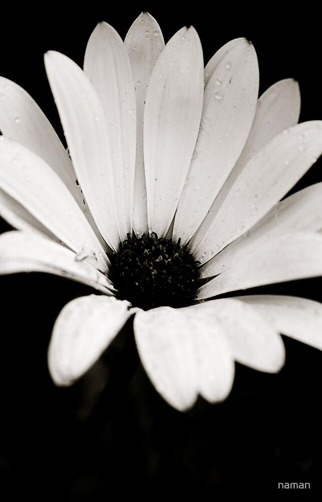 Flower B&W by naman
