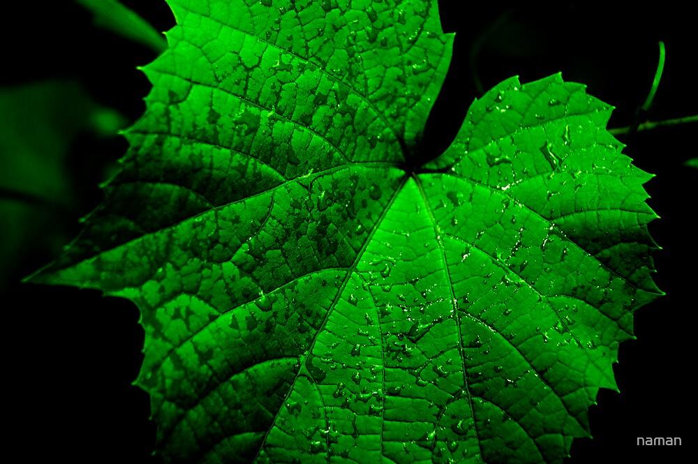 Leaf by naman