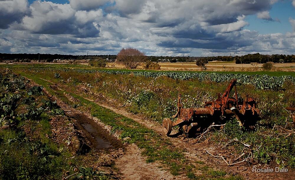 Farm view by Rosalie Dale