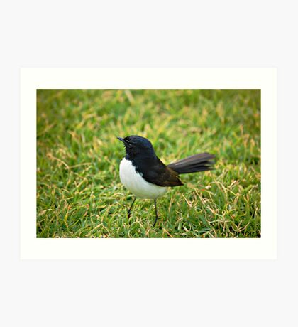 Willy Wagtail. Art Print