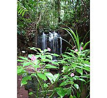 Flowers & Waterfall at Paronella Park Queensland Photographic Print