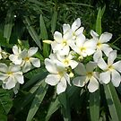Flower 1 by Biswajit Pandey