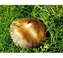 Bronze Medal Mushroom Photographic Print