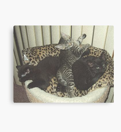 Three Kittens Canvas Print