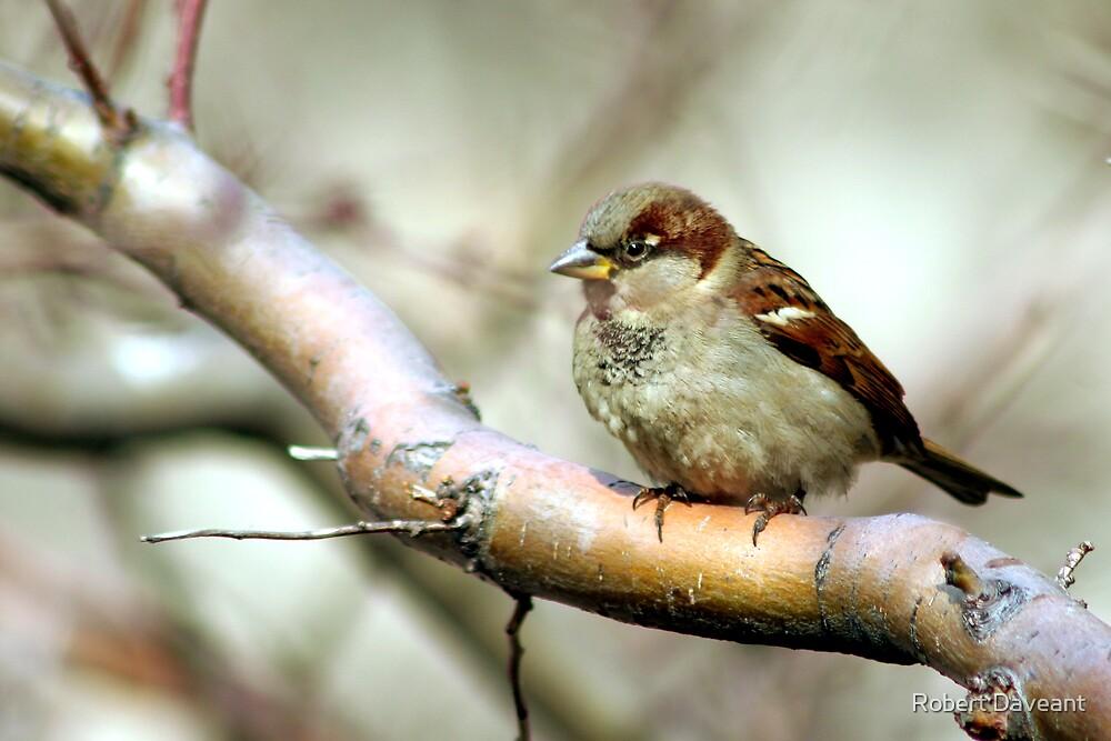Little Brown Bird by Robert Daveant