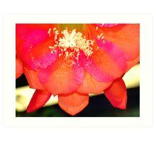 Bloomin' Lovely Art Print