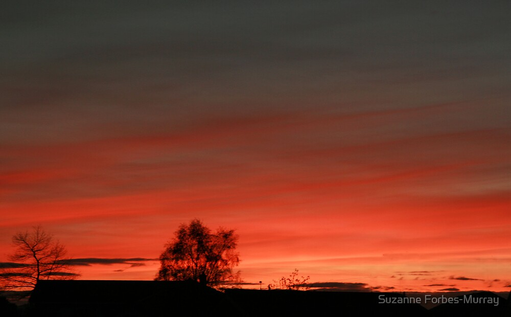 Red Sky Shepherds Delight by Suzanne Forbes-Murray