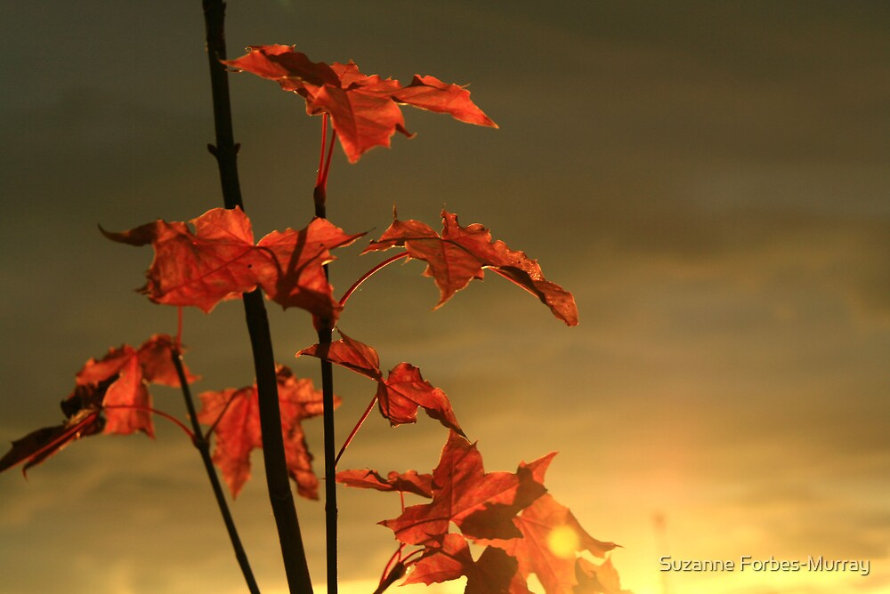 light on the leaves by Suzanne Forbes-Murray