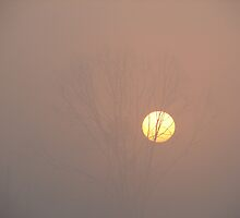 Foggy Sunrise by Wendella Reeves