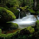 Mossy Cascades by Robert Mullner