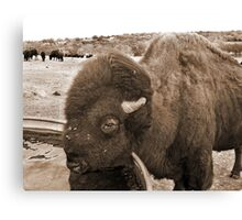Buffalo Bill Canvas Print