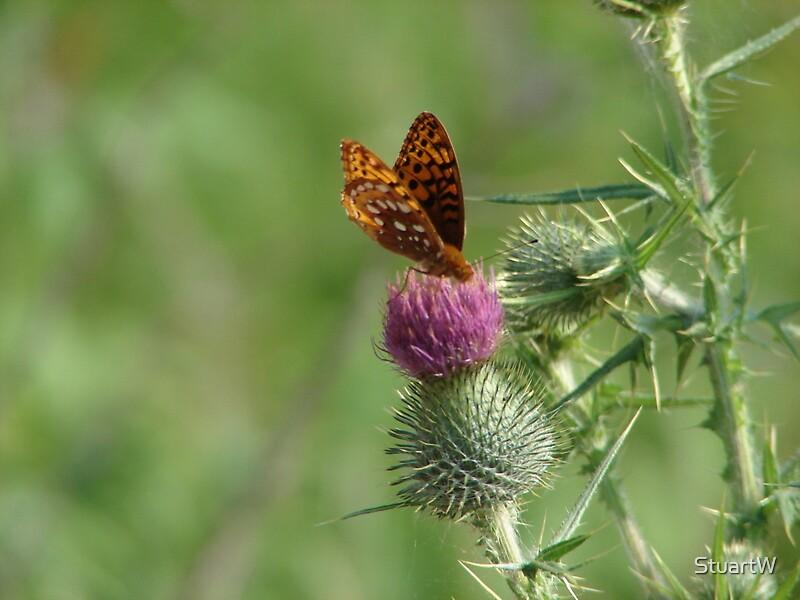 Butterfly by StuartW