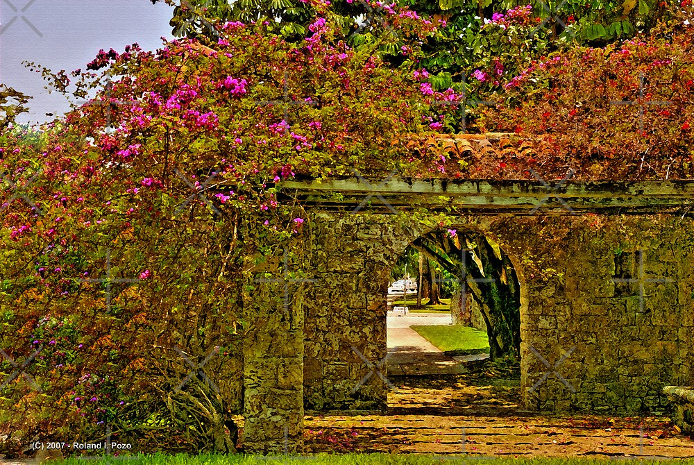 Bougainvillea Path by photorolandi