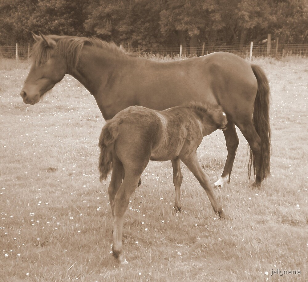 Sepia Mare and Foal by jellymania