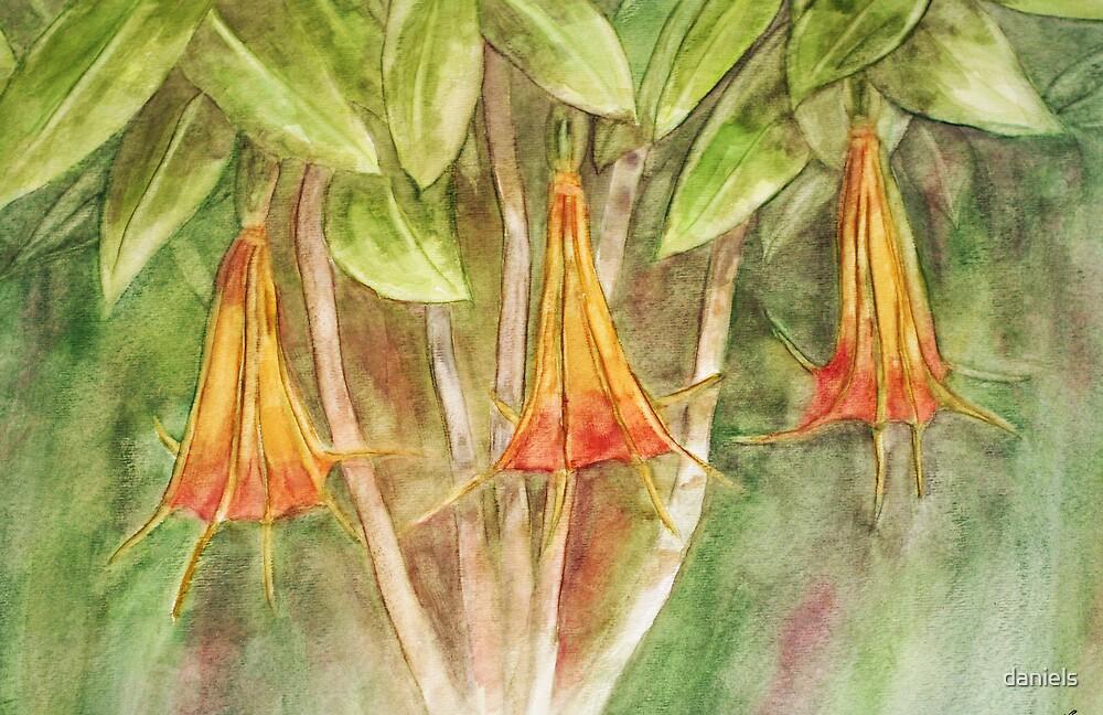 trumpet flowers by daniels
