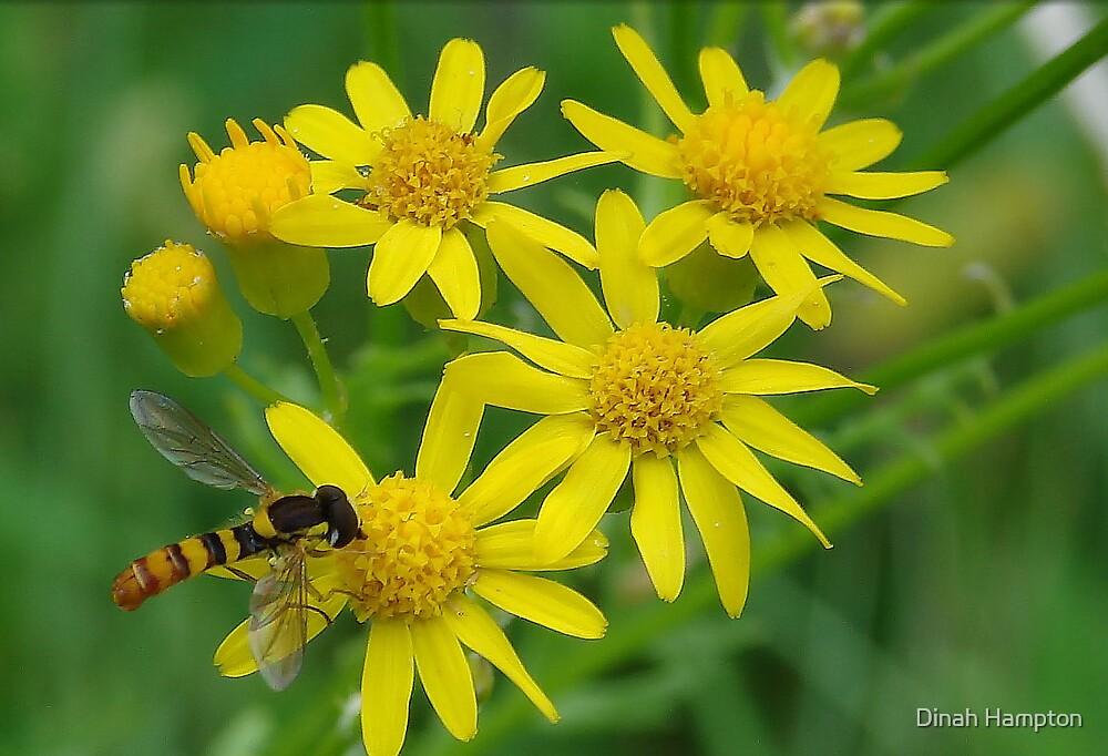 Nectar by Dinah Hampton