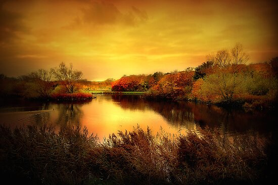 Golden Pond by PhotoDream Art