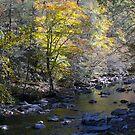 Autumn's Painting by Sherri Hamilton