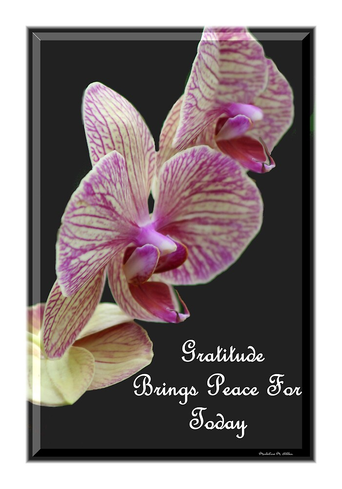 Gratitude Brings Peace For Today by Madeline M  Allen