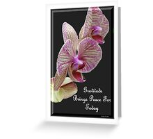 Gratitude Brings Peace For Today Greeting Card
