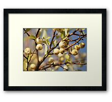 paradise apples Framed Print