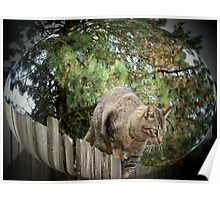 Tiger on the fence Poster