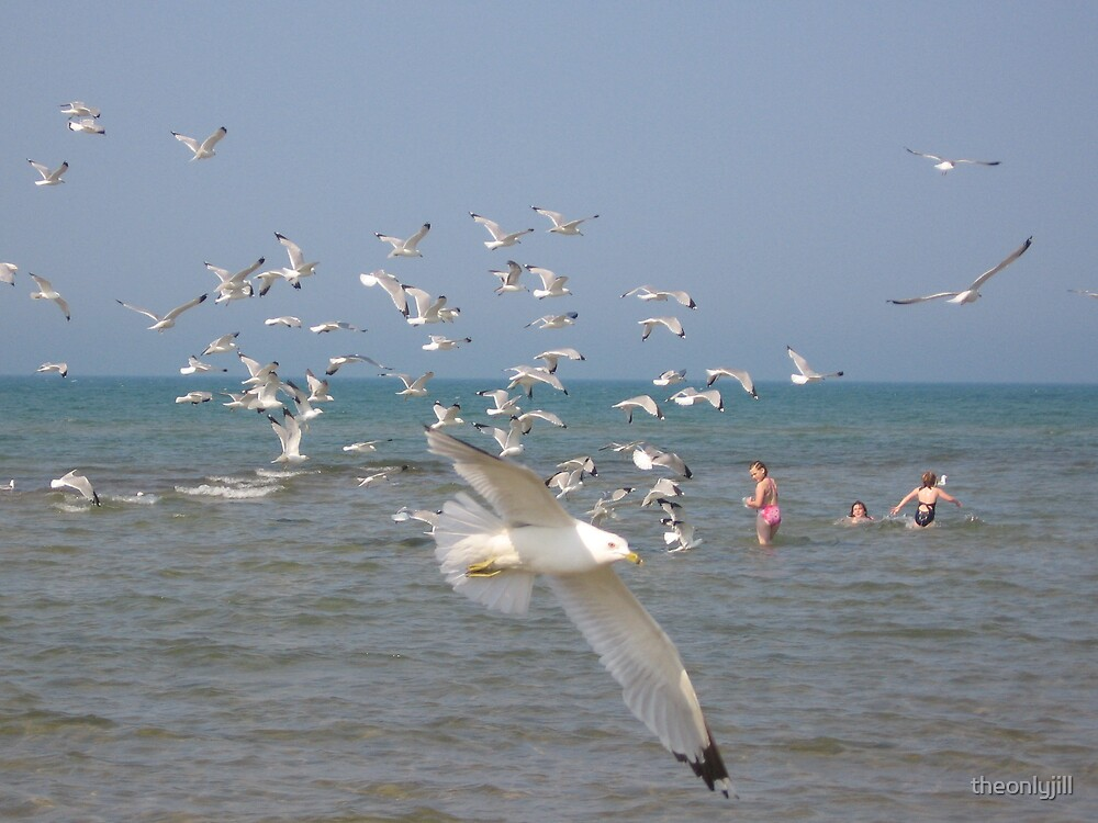 Seagulls by theonlyjill