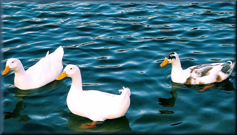 Duck by brandie