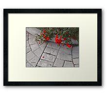 Petali Rossi Framed Print