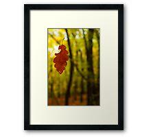 Suspended Leaf Framed Print