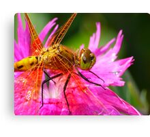 Dragonfly, Orange on Electric Pink Canvas Print