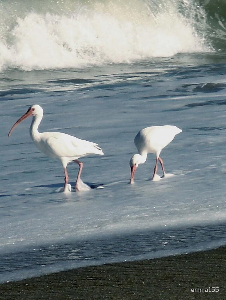 Birds on Beach by emma155
