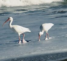 Birds on Beach by emma155