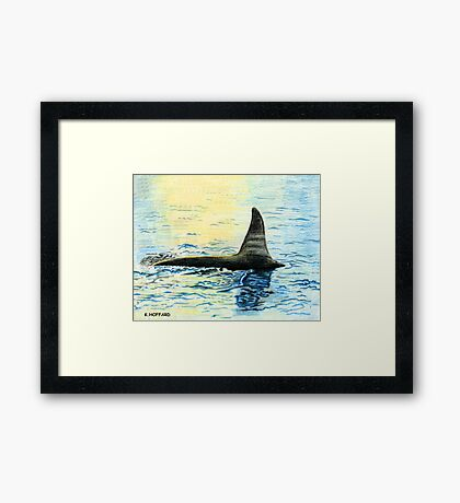 Killer Whale Framed Print