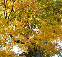 Autumn Gold by Crockpot