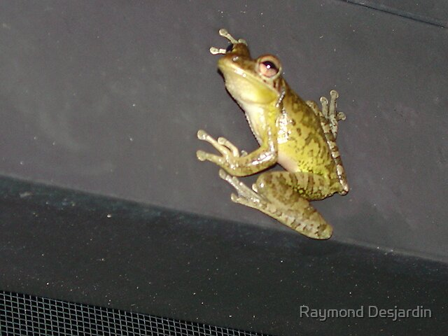 frog, just hanging out by Raymond Desjardin